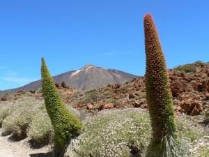 Kelione-zygiai-Tenerife-4