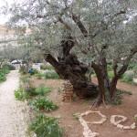 Izraelis 11