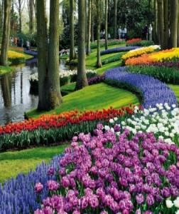 Gėlių žydėjimo šventė Olandijoje - pažintinė kelionė į Olandiją 1
