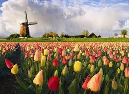 Gėlių žydėjimo šventė Olandijoje - pažintinė kelionė į Olandiją 2