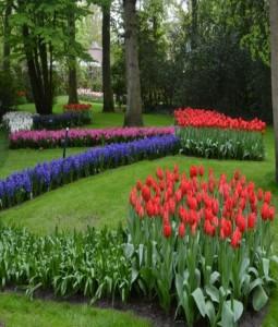 Gėlių žydėjimo šventė Olandijoje - pažintinė kelionė į Olandiją 3