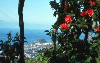 Pazintine-poilsine-kelione-Portugalija-Madeiros sala 4