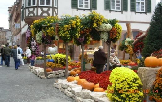 Pažintinė kelionė į Vokietiją. Chrizantemų žydėjimo šventė 1
