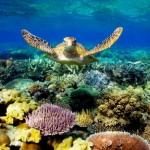 Australija ir Naujoji Zelandija - egzotinė kelionė 9