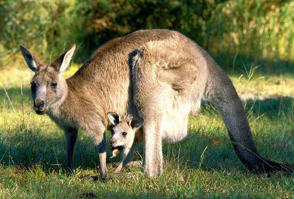 Australija ir Naujoji Zelandija - egzotinė kelionė 12
