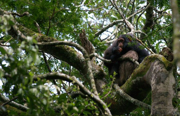 Egzotine kelione-Uganda-10