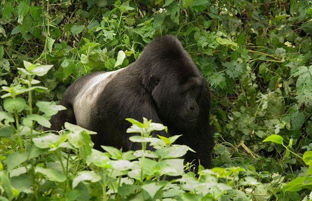 Egzotine kelione-Uganda-24